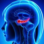 Qual o papel do hipocampo na memória em Alzheimer?